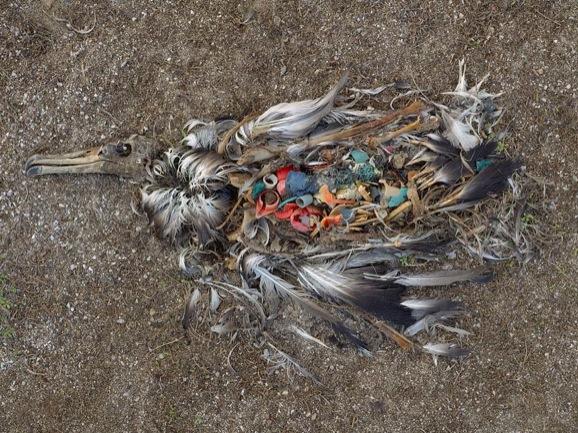 Birds Plastics 1